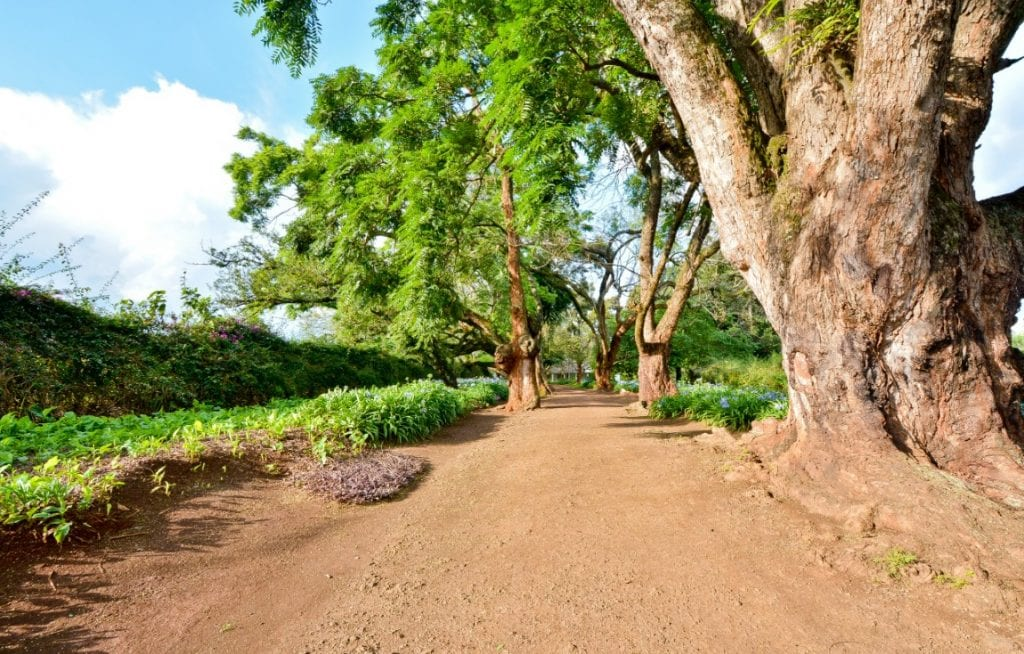 Indigenous Trees