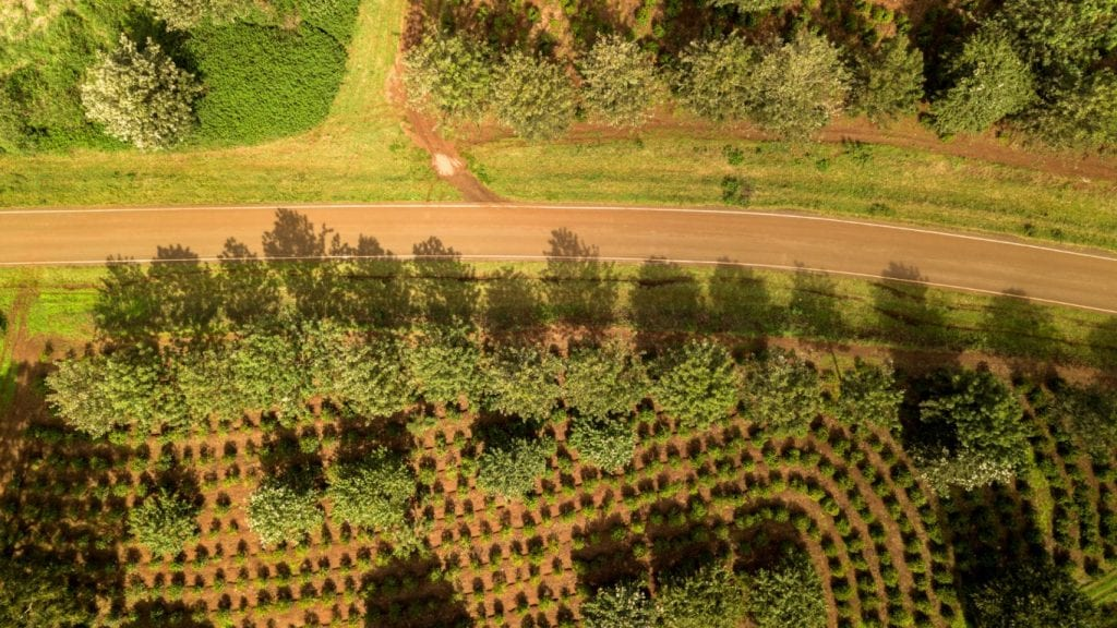 The road in the plantation